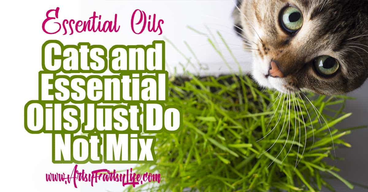 Warning! Essential Oil Diffusers Are Harmful To Cats... I love essential oils and use them all the time! But luckily I found out about how toxic they are to cats before I bought a diffuser. While they are great for a ton of natural uses, only a few of them are safe around cats! #essentialoils #cats #diffusers