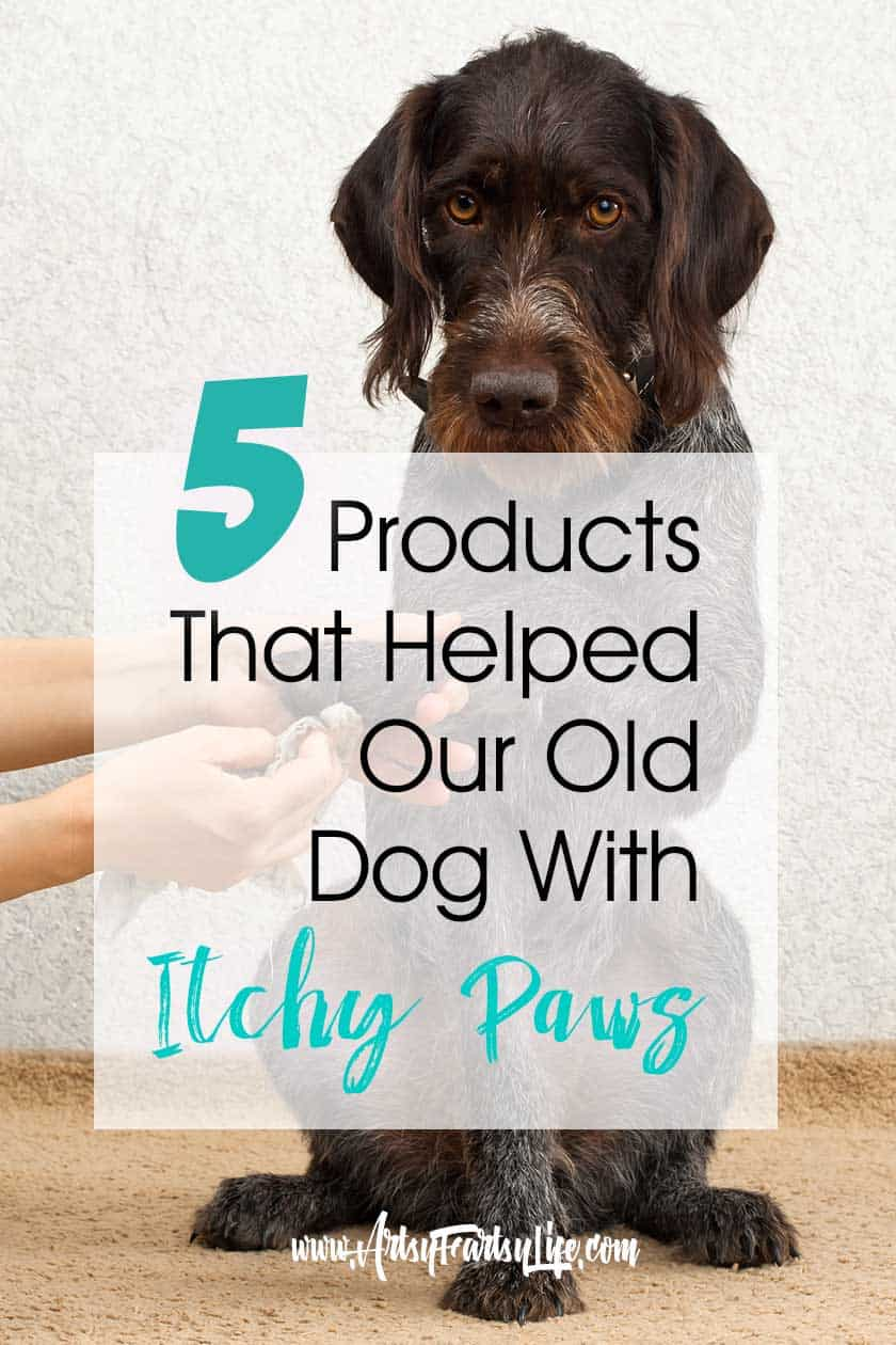 5 Products That Helped Our Old Dog With Itchy Paws... Our old dog has allergies that cause biting and chewing on her feet. We have tried all the remedy suggestions from all natural to medication and found these 5 to be best products when used altogether!