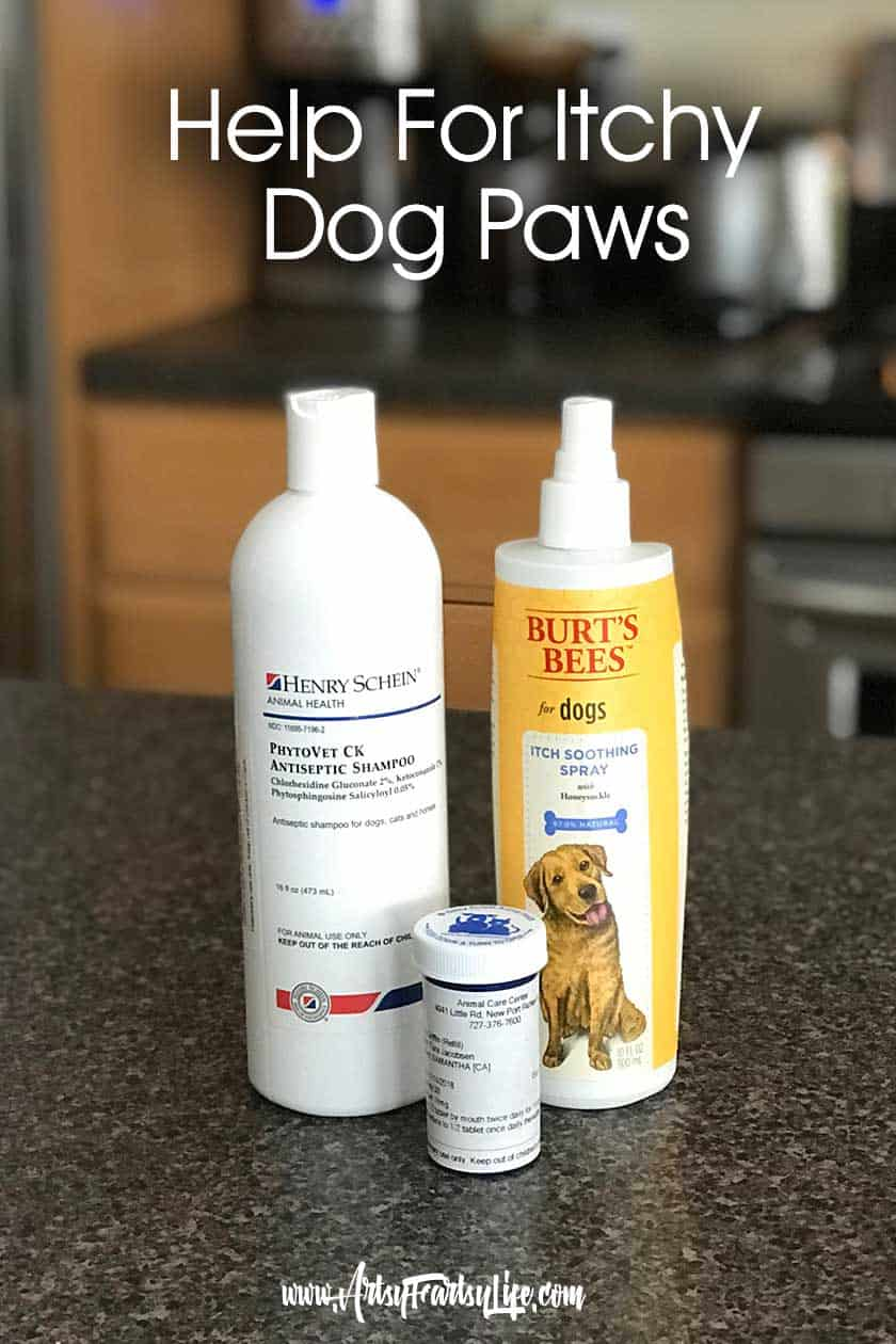 Help For Itchy Dog Paws... Remedies for when your dog is chewing her feet. Medicated shampoo, anti itch spray and medication.