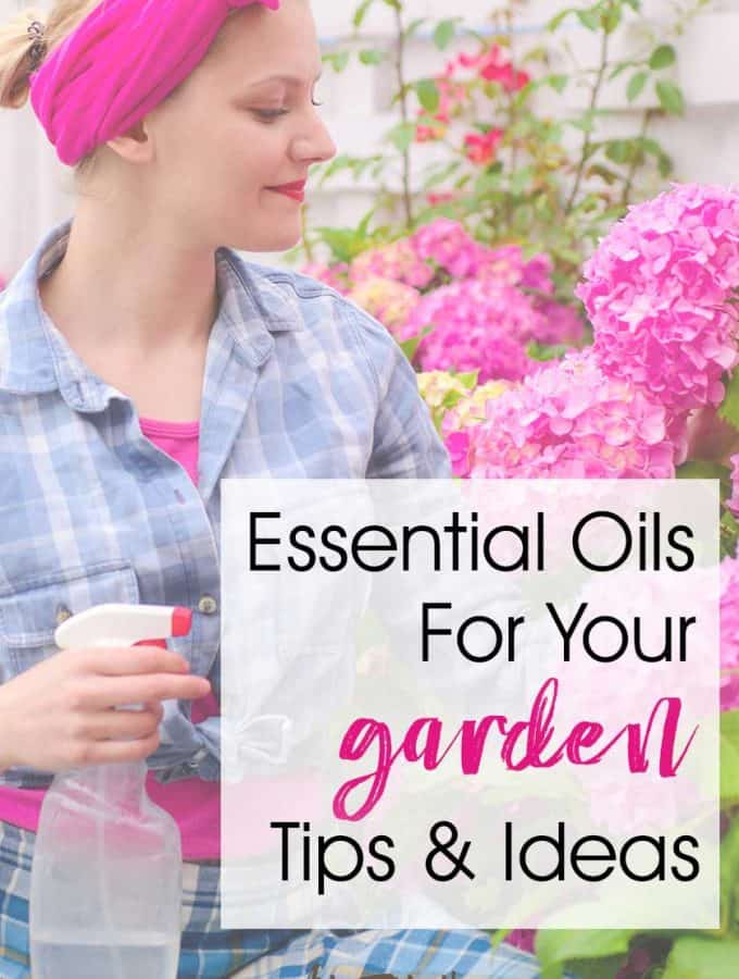 Essential Oils for Gardening... If you are looking for natural living ideas, choosing essential oils for your garden is a great idea! Tips and ideas for how to combat pests, fungus and bugs. Recipes for spray bottles, cotton balls and tea. #essentialoils #garden #spring
