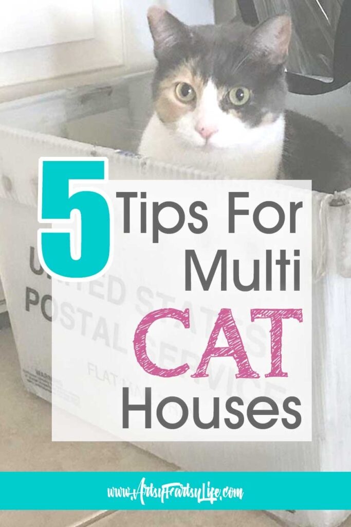 5 Tips To Make Your Multi-Cat House Happy