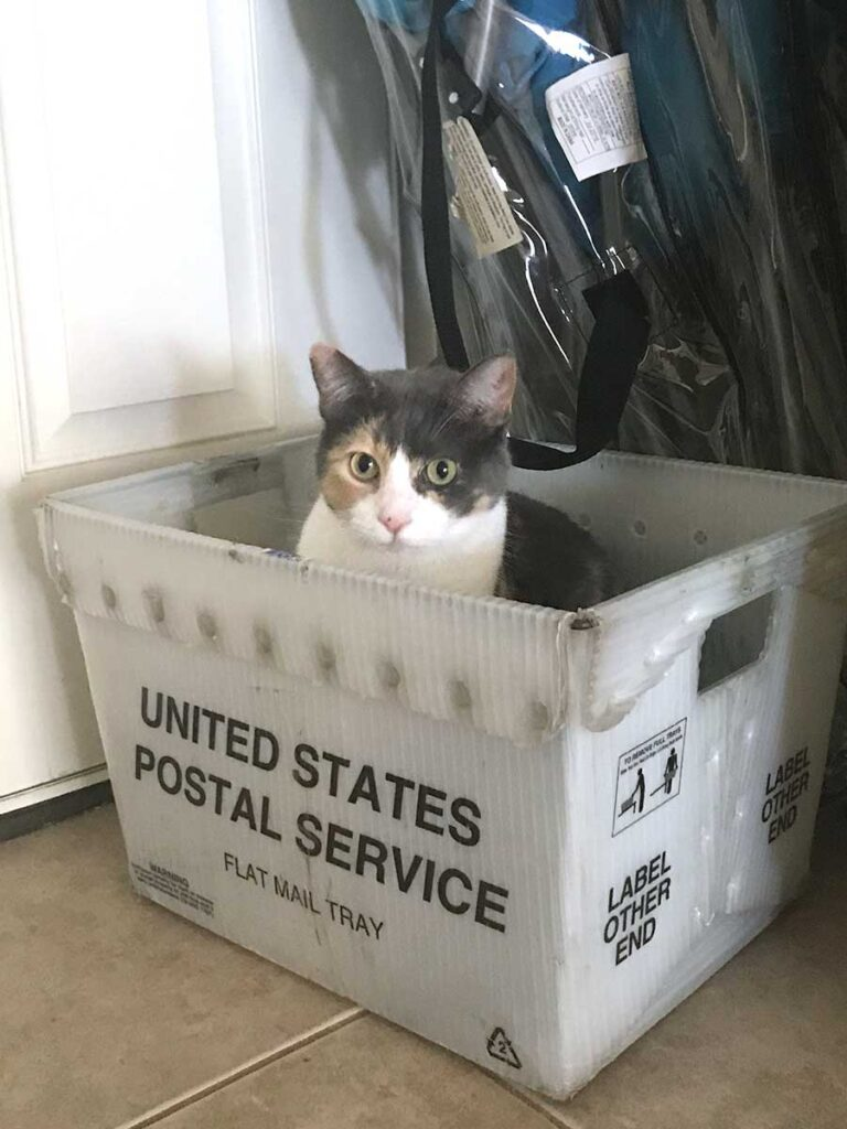 Betty cat in a USPS box