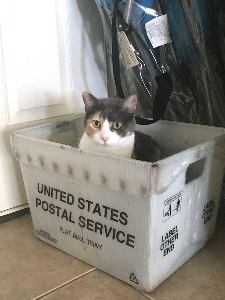 Betty cat in a USPS box