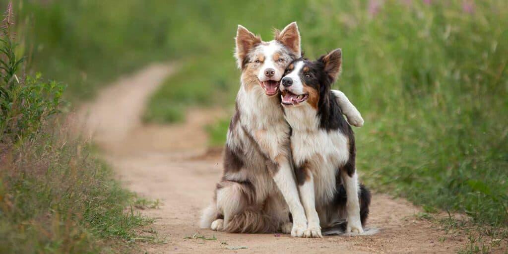 Dogs Outside In a Field
