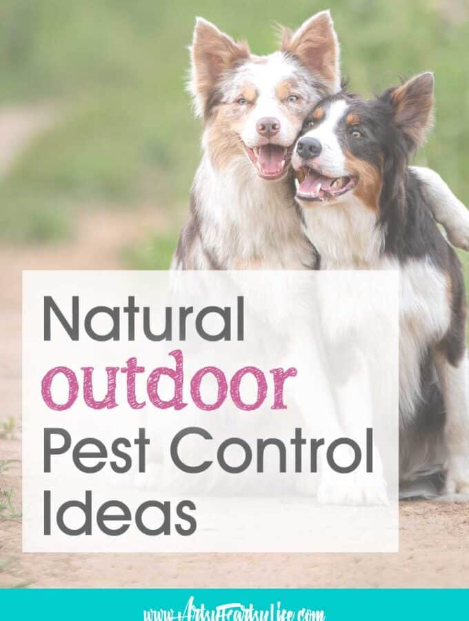 Natural Outdoor Pest Control Ideas