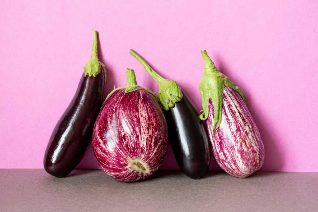Aubergine colored eggplants